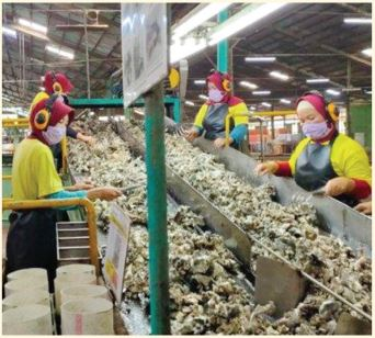 Crumb Rubber Factory in West Kalimantan Experiences the Supply Shortage for Raw Materials (Bokar) Around 50%